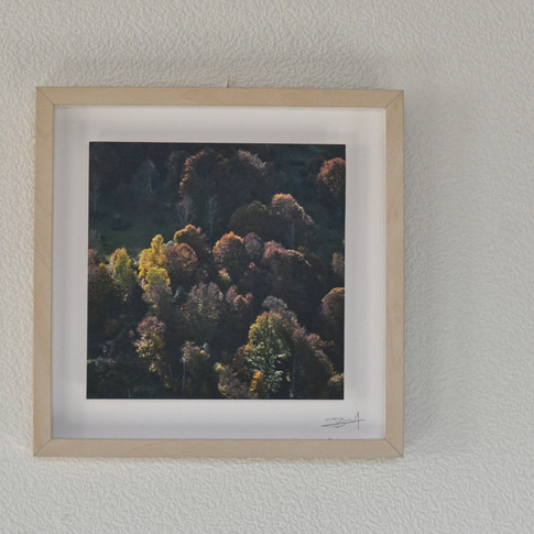 Foret   42 €