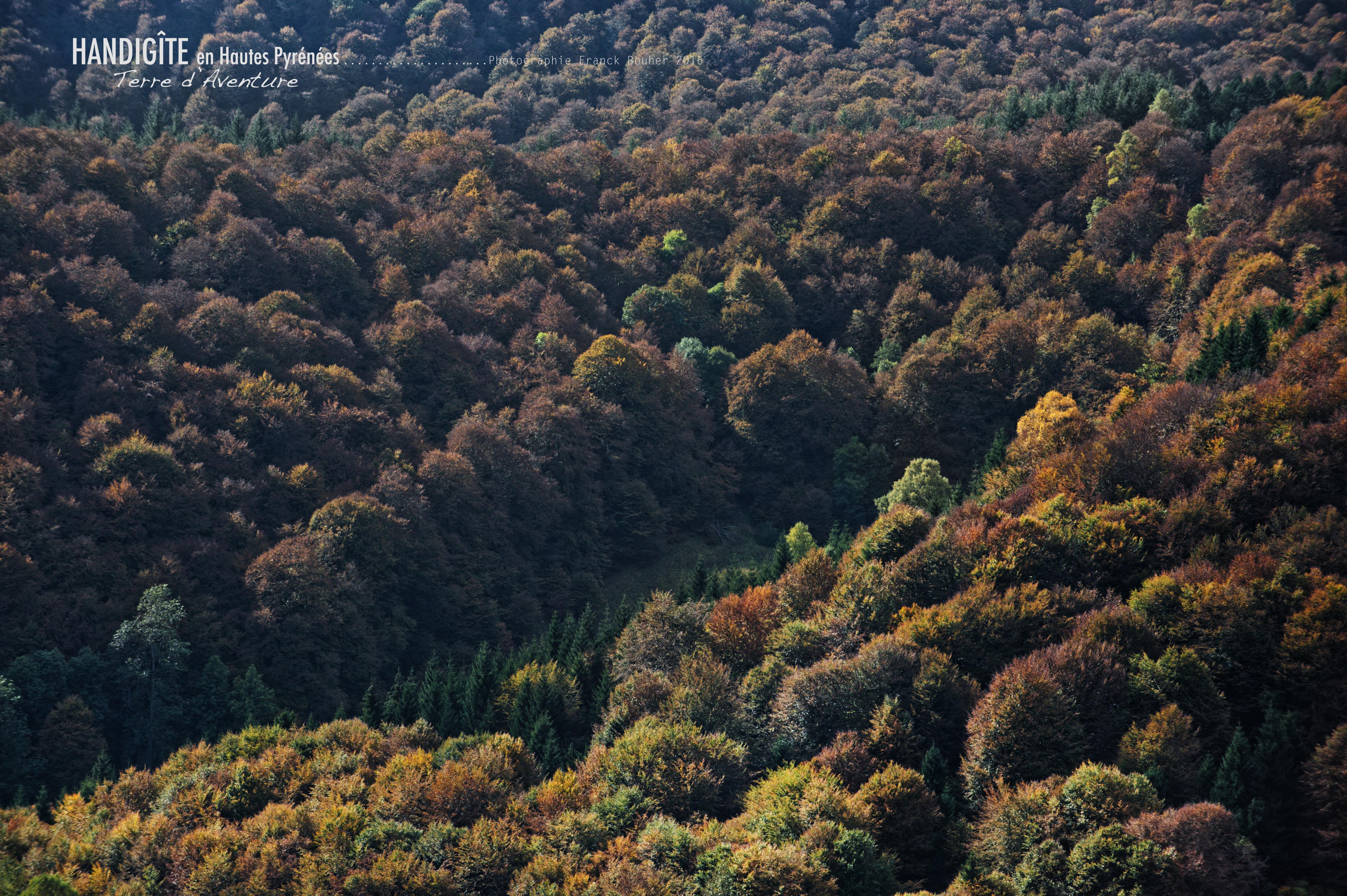 Forêt  ref: N05