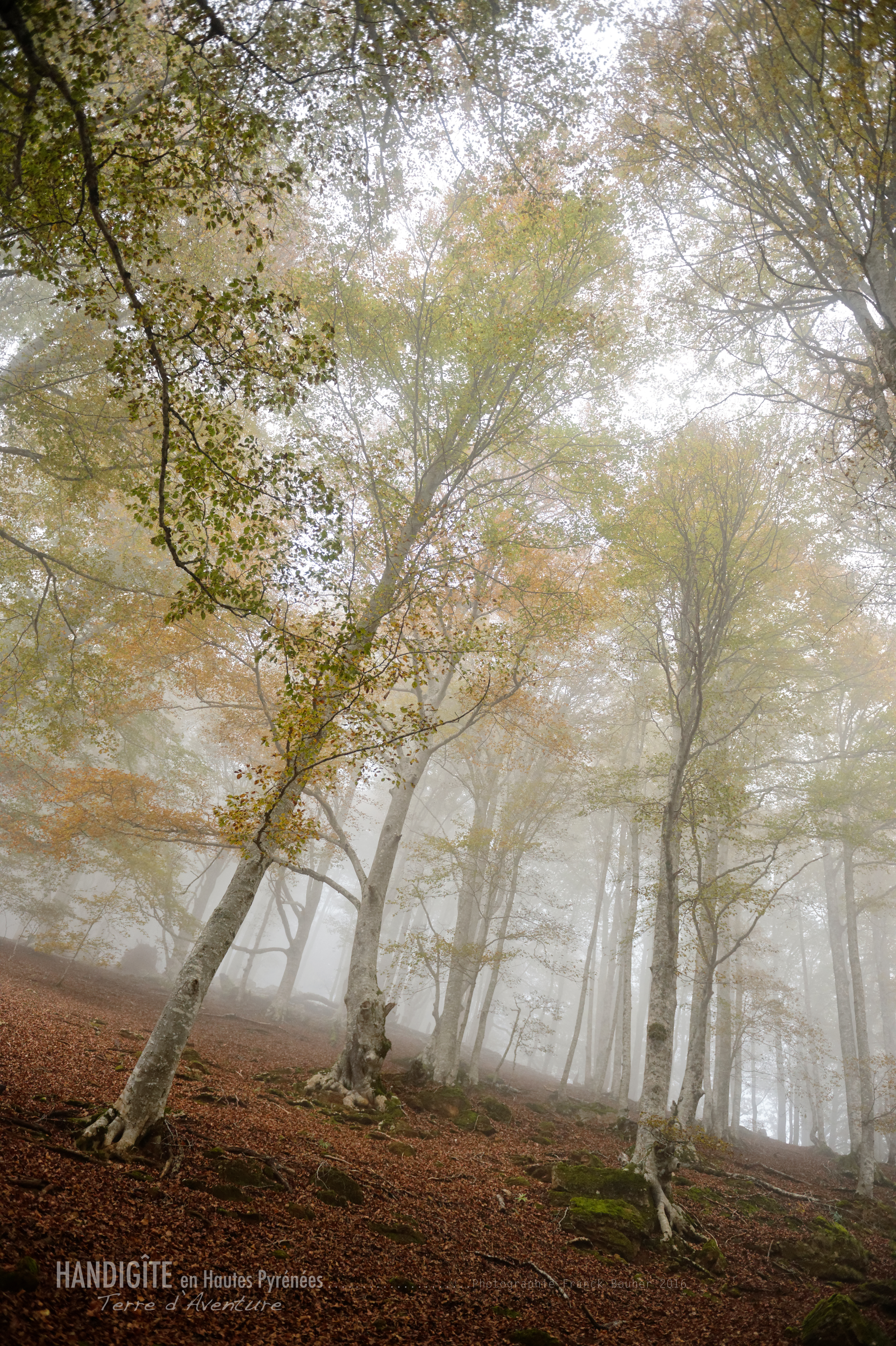 Brume d'automne ref: N06