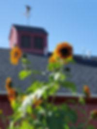 Campus_Closeup_Barn_Sunflower.jpg