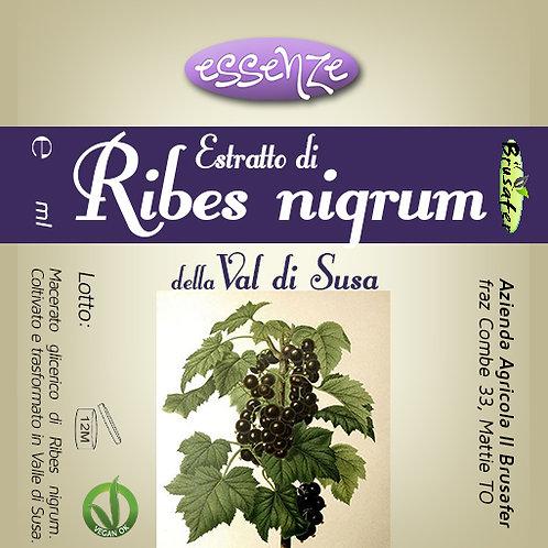 Estratto di Ribes nigrum (50 ml)