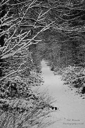 Deep Woodland Snow