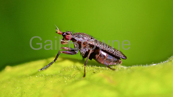 Micro Fly