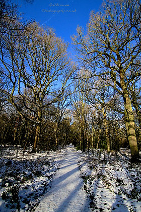 Snow Melting in Woodland