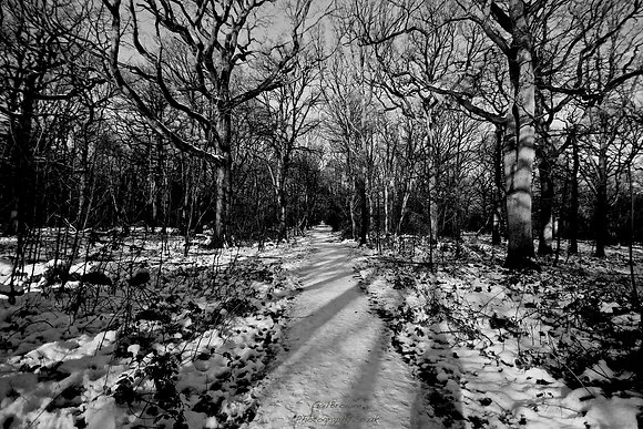 Sun Filter through Snow Woodland