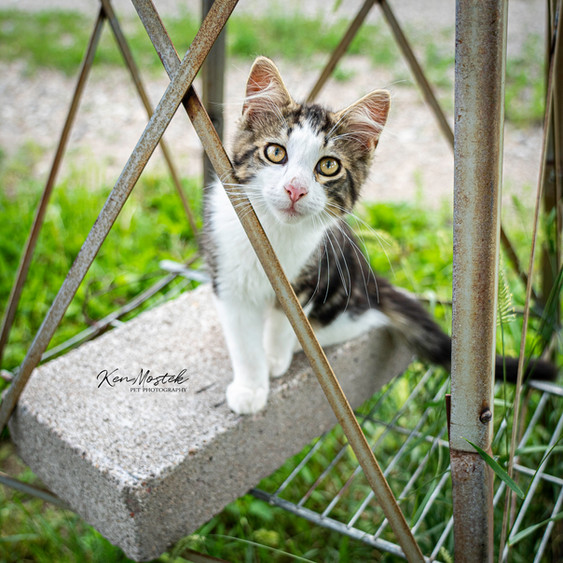 windmill cat with watermark for social.j
