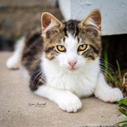 kitten with watermark for social media.j