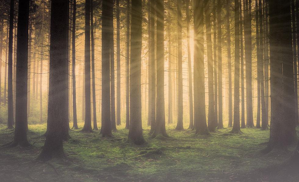 forest-2984960.jpg
