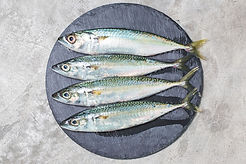 Mackerel_Copyright2133.jpg