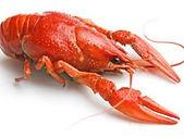 Crawfish600.jpg