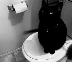 reine on toilet seat
