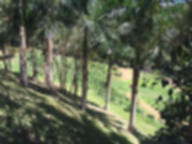paisaje 4.jpg