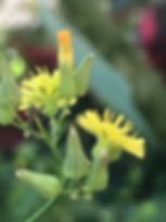 plantitas con flor.jpg