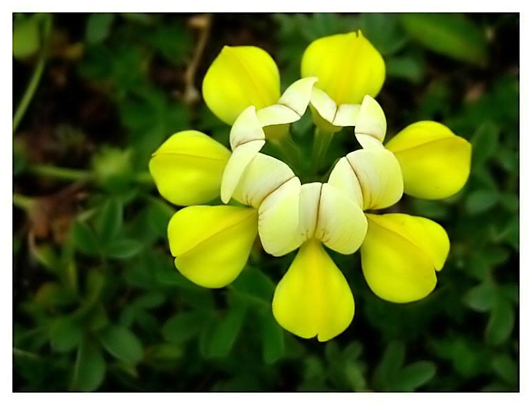 Çamlıhemşin Florası