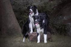 winx and noddy-1.jpg