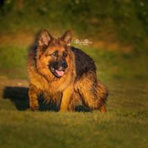 NARRABEEN DOG PARK-2.jpg