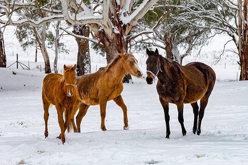 Three Wise Horses