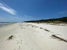 Wassaw Sandy Beach.jpg
