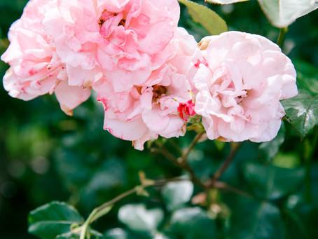 ⑩:「花の香り」