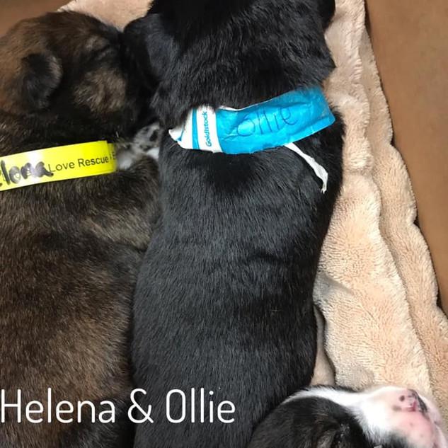 Helana and Ollie.jpg
