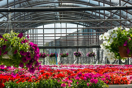 Ombrario fioriture stagionali
