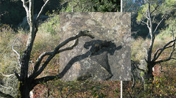 Stone Shedow