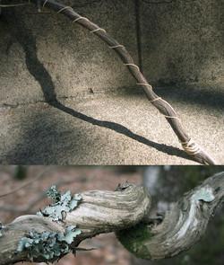 Tree Bond