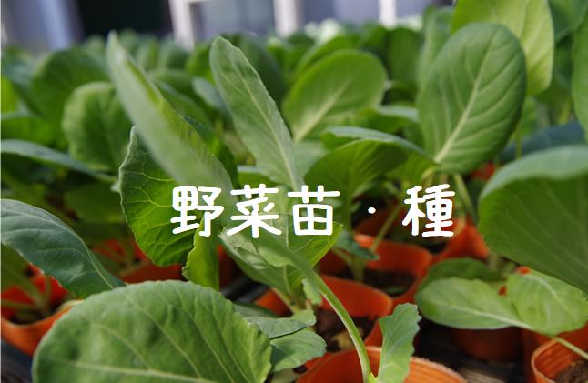 野菜苗・種.png