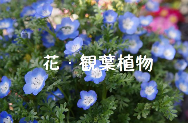 花・観葉植物.png