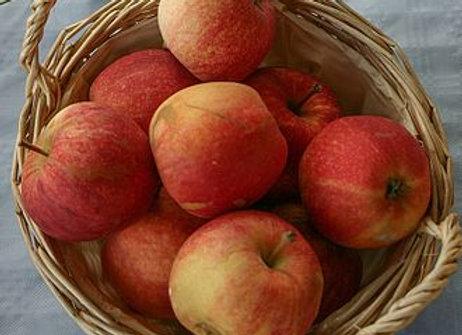 Pommes Royal Gala le kg local Fr