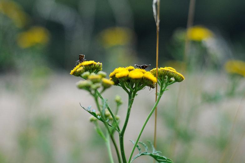 sání nektaru.jpg