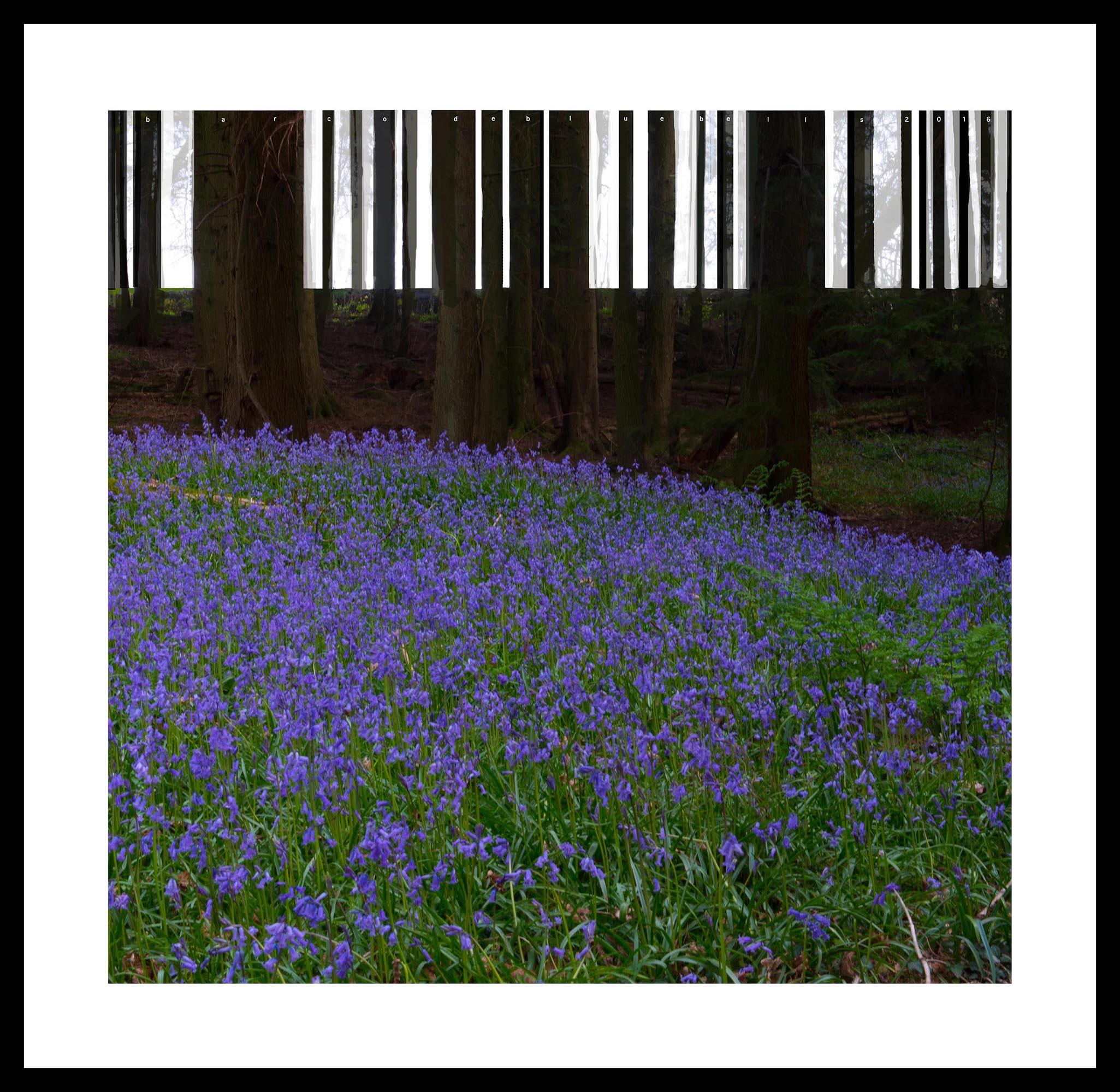 Barcode Bluebells