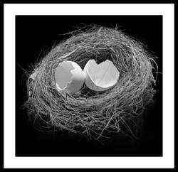 Nyth. Nest