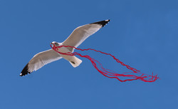 upcycle gull n rope raw