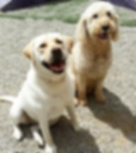 LeeLou & Gary Grady AFAH 2.jpg