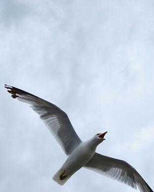 BHML Free Bird_edited_edited.jpg