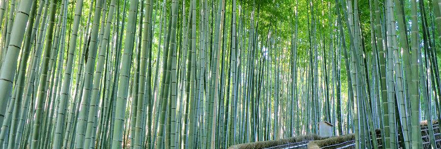 Bamboe bos in Japan