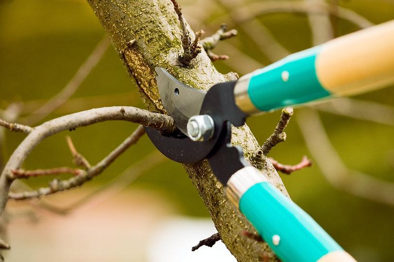 Tree Pruning Fresno CA