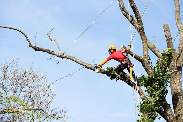 Tree Service Fresno CA