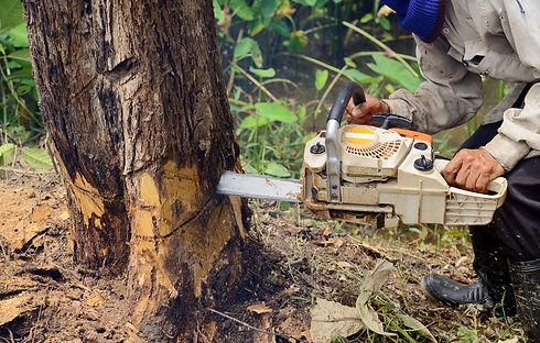 Fresno CA Tree Service