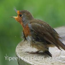 Yipee! I'm clean again!