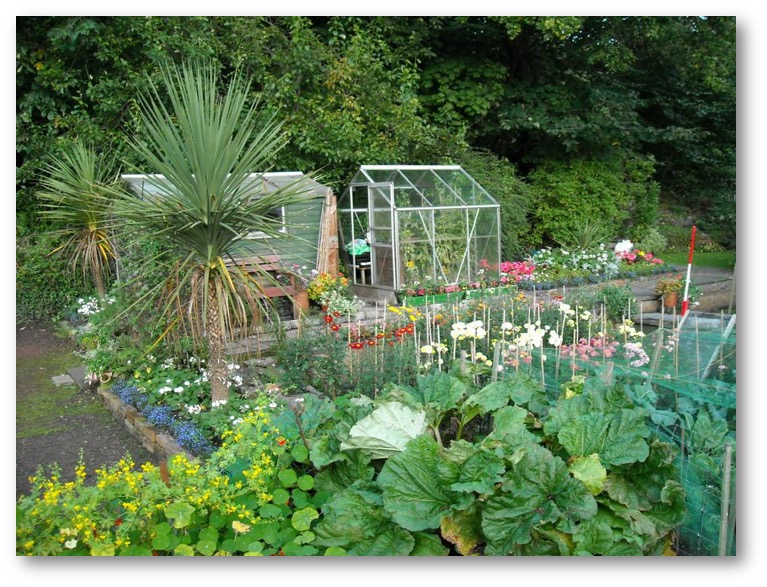 berriedale allotments