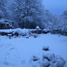 Joe Clark - Winter Garden.JPG