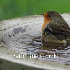 Robin - Bath time I think!