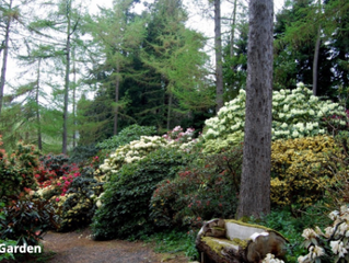 Annual Outing to Glendoick & Branklyn Gardens