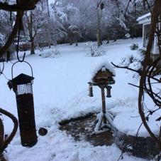 Pam De Pree Winter Garden2.JPG