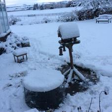 Pam De Pree Winter Garden1.JPG