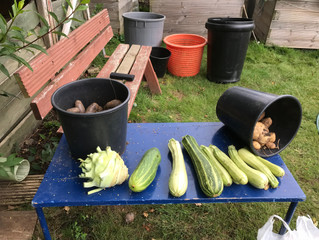 Allotment Tales - Evening Talk, Wednesday 7 November