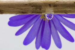 Droplet image