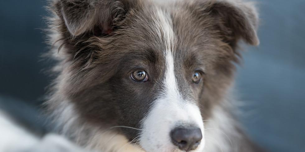 Geheimcode Hundesprache - damit wir unsere vierbeinigen Freunde noch besser verstehen